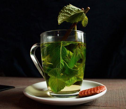 Les vertus du thé vert bio